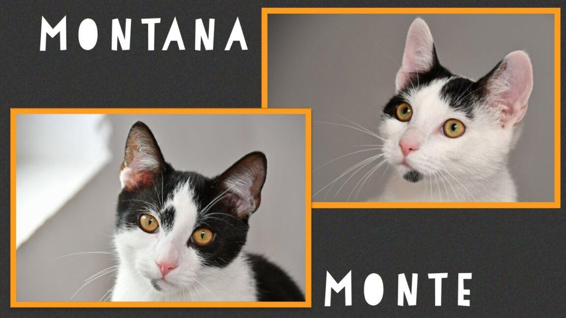 Monte & Montana